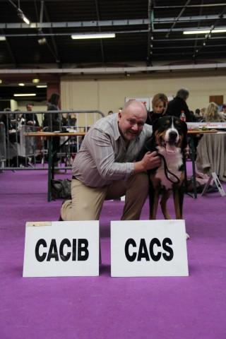 à 15 mois, il obtient sa confirmation et son premier CACS / CACIB à l'exposition de Valence, spéciale de race