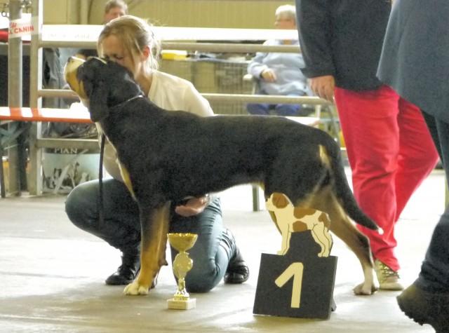 Joly-coeur, best in show des jeunes bouviers suisses, Ettelbruck