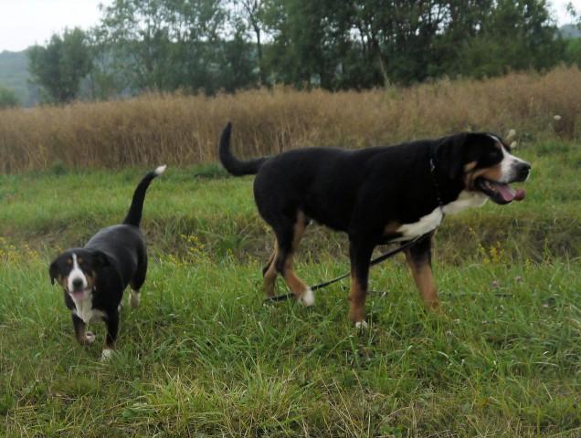 Bonnie et Aslan apprécient les ballades dans les champs