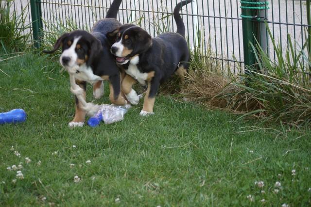 Joly retrouve avec joie sa soeur Jazzy