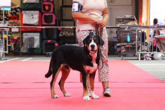 1ère sortie sur les rings, où il obtient un meilleur puppy de l'exposition de Mâcon!
