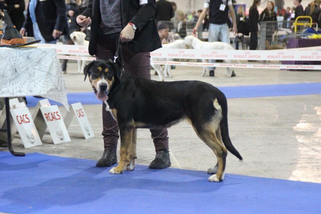 Luffy-Lolipop, très prometteur, meilleur puppy