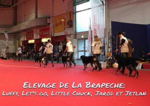 """lot d'affixe """"De Brapeche"""" Metz (11/2015)"""