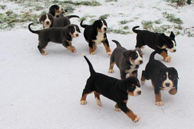 7 semaines dans la neige
